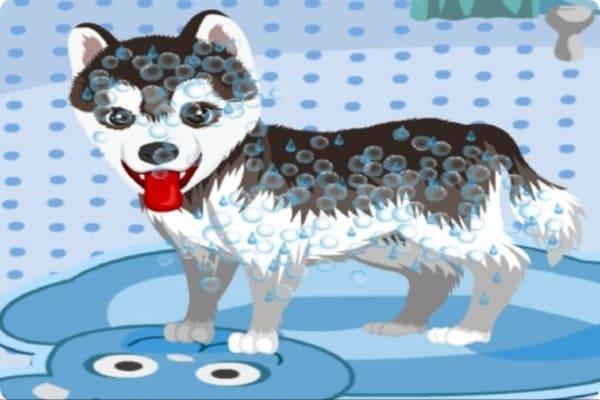 Play My Cute Dog Bathing